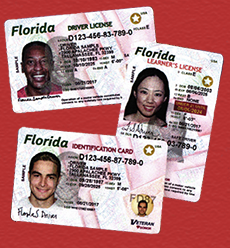 drivers license bureau brandon florida